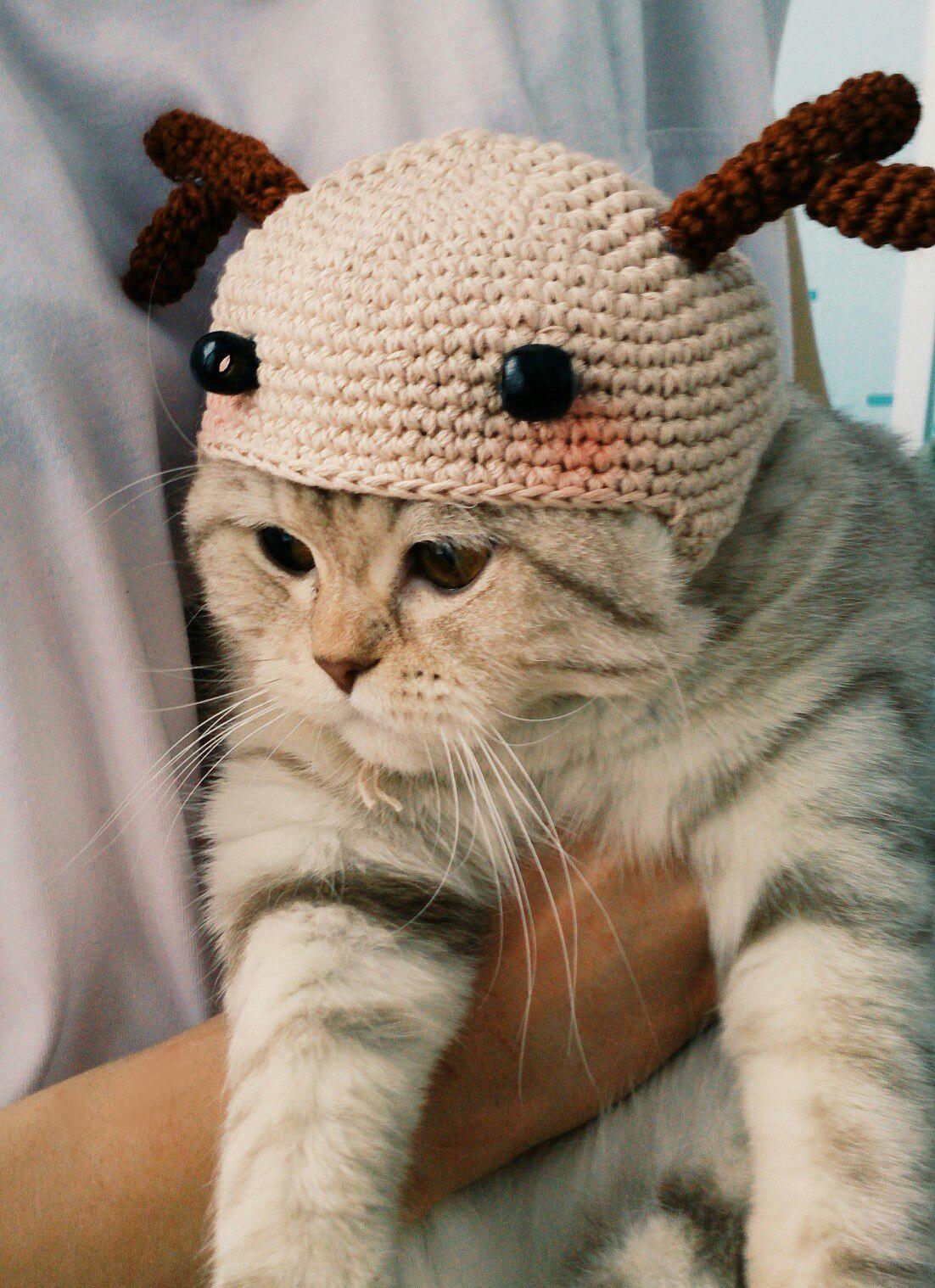 вязаная шапочка для кота